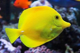 saltwater-fish-720