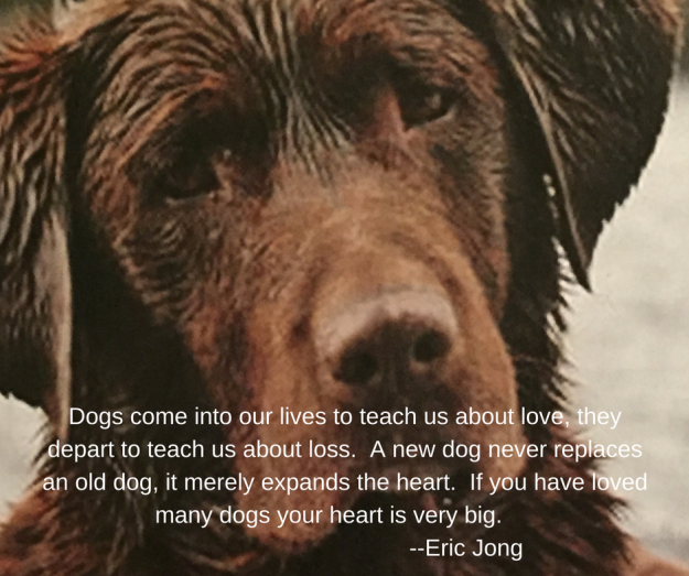 Dogs come into our lives to teach us about love, they depart to teach us about loss. A new dog never replacesan old dog. it merely expands the heart. If you have loved many dogs your heart is very big. --Eric Jong.png