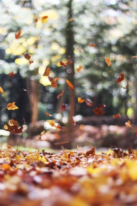 leaves-731150_1920