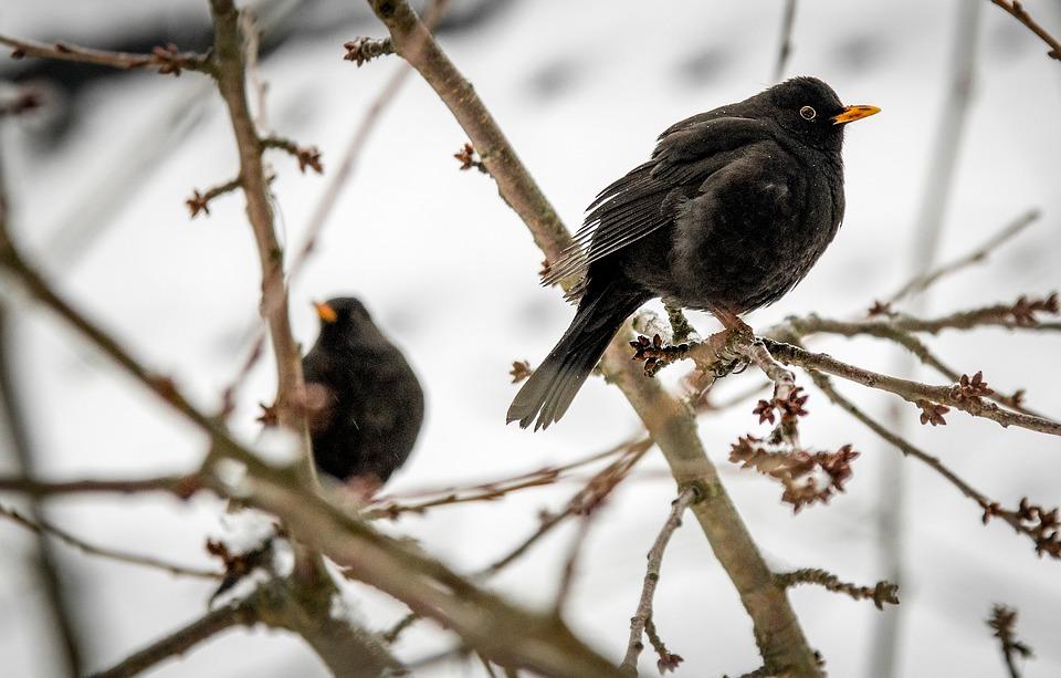 birds-1222648_960_720